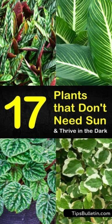 17 Amazing Plants That Don T Need Sun And Thrive In The Dark In 2020 Plants That Love Shade