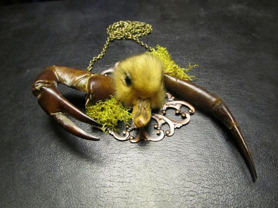 taxidermy duck head necklace. actually for @Sandra Terry Fernquist True Stuff