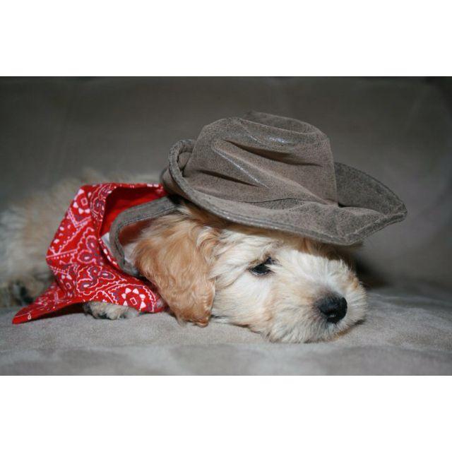 Nacho as a puppy