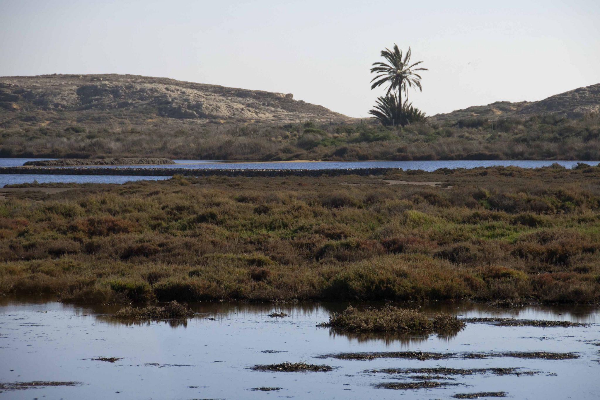 https://flic.kr/p/qazgh9 | Humedal costero | Estas salinas aprovechan un humedal natural pegado a la costa, ecosistemas que fueron habituales a lo largo de la costa mediterránea.