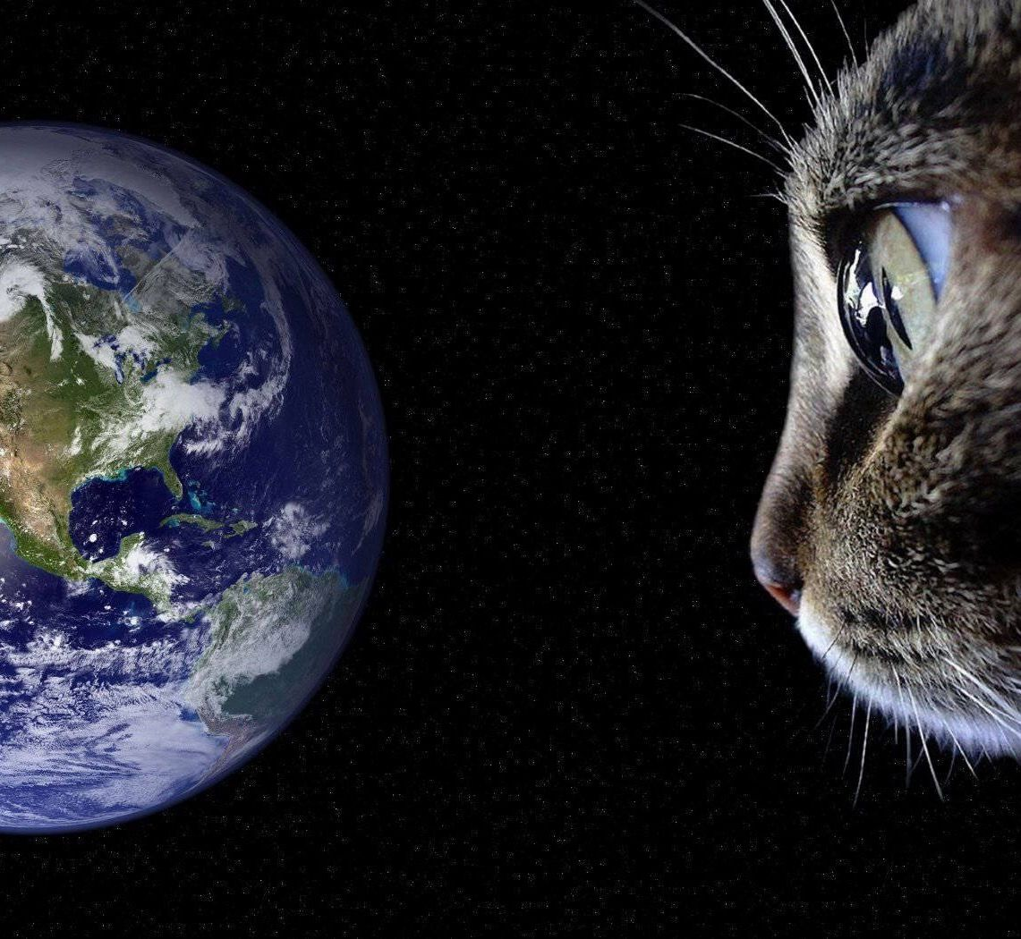 Pin By Rachel K Schlueter On Kitties Of Planet Earth And Beyond Celestial Bodies Celestial Planet Earth