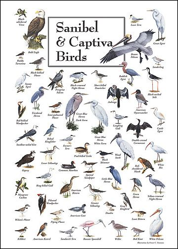 Waterfowl identification chart google search also sanibel island rh pinterest
