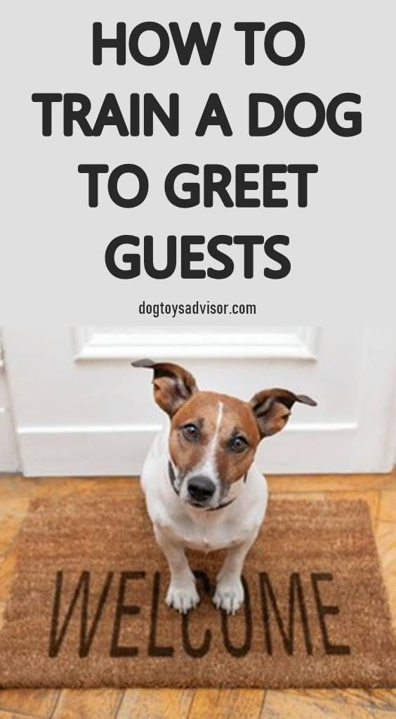 Dog Do you want to stop your dog from jumping on people and teach him to greet guests nicely Heres how to teach your dog good manners