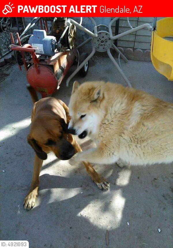 Lost Billy Bloodhound Last Seen Feb 23 2018 Glendale Az 85306 Near N 53rd Ave W Saint Moritz Ln 602 718 4724 Find Pets