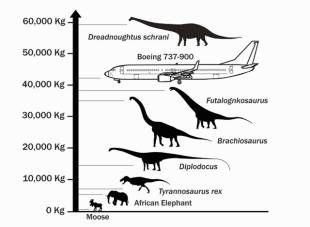 moby dick whale størrelse