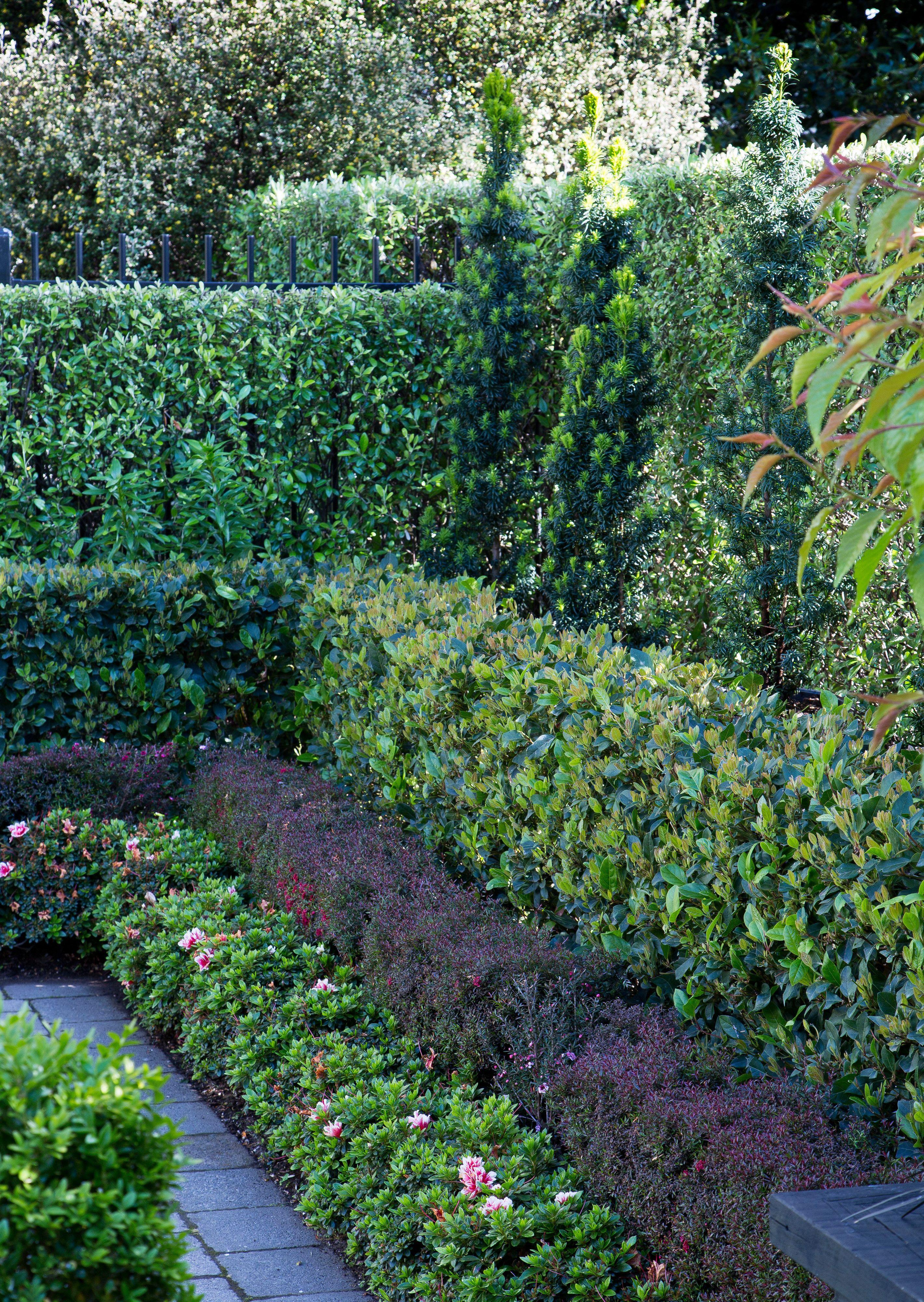Layered Hedges Garden Hedges Hedges Landscaping Urban Garden