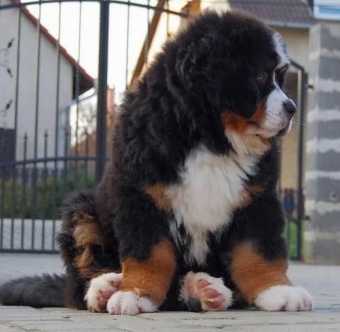 huge but so cute... look at that face