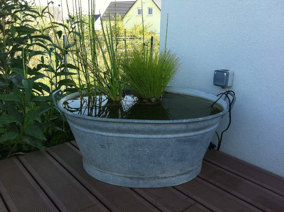Mini jardin aquatique | Jardin | Pinterest | Galvanized tub, Tubs ...