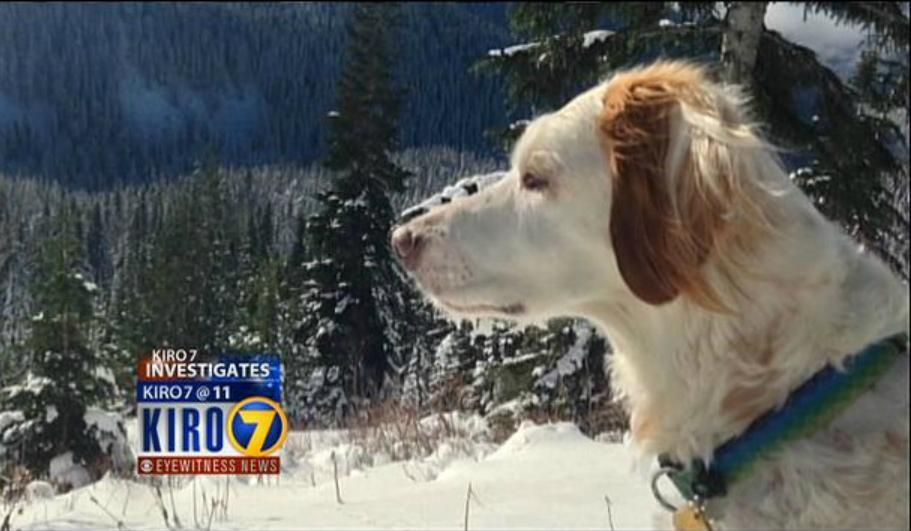 Seattle Purebred Dog Rescue Kills Lost Pet Notifies Owner By Mail Rescue Dogs Losing A Pet Purebred Dogs