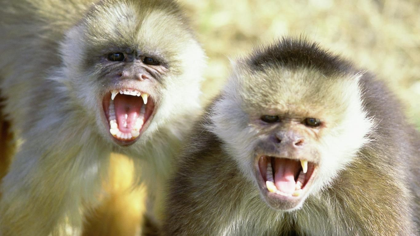 Scary Monkey Pictures 1