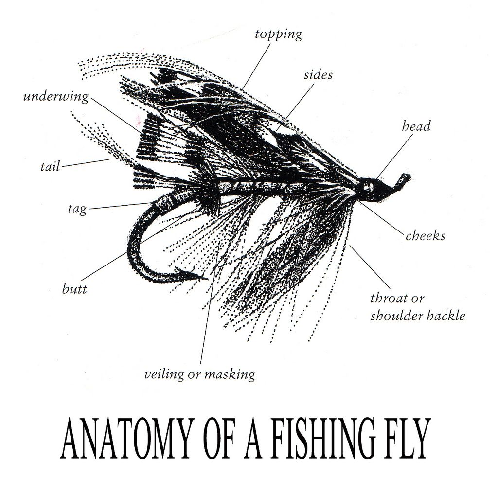 Anatomy of a fishing fly | Fly tying and Fly fishing