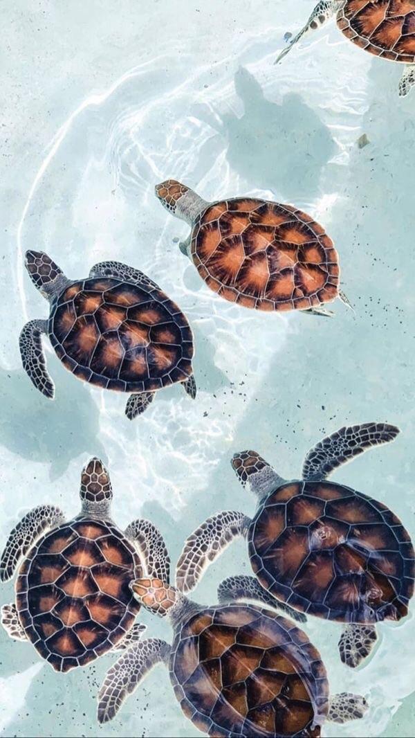 I Love Cute Animals Pinterest On We Heart It Turtle Wallpaper Ocean Wallpaper Cute Wallpaper Backgrounds