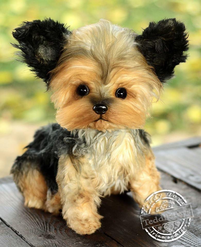 Puppy Yorkshire Terrier Stuffed Dog Realistic Stuffed Dog Pet Portrait Susse Hunde Bilder Lustige Katzen Und Hunde Susse Hunde