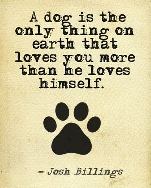 Quotes About Dogs We Love This Beautiful Dog Quote See More Photos On Our Blog Http