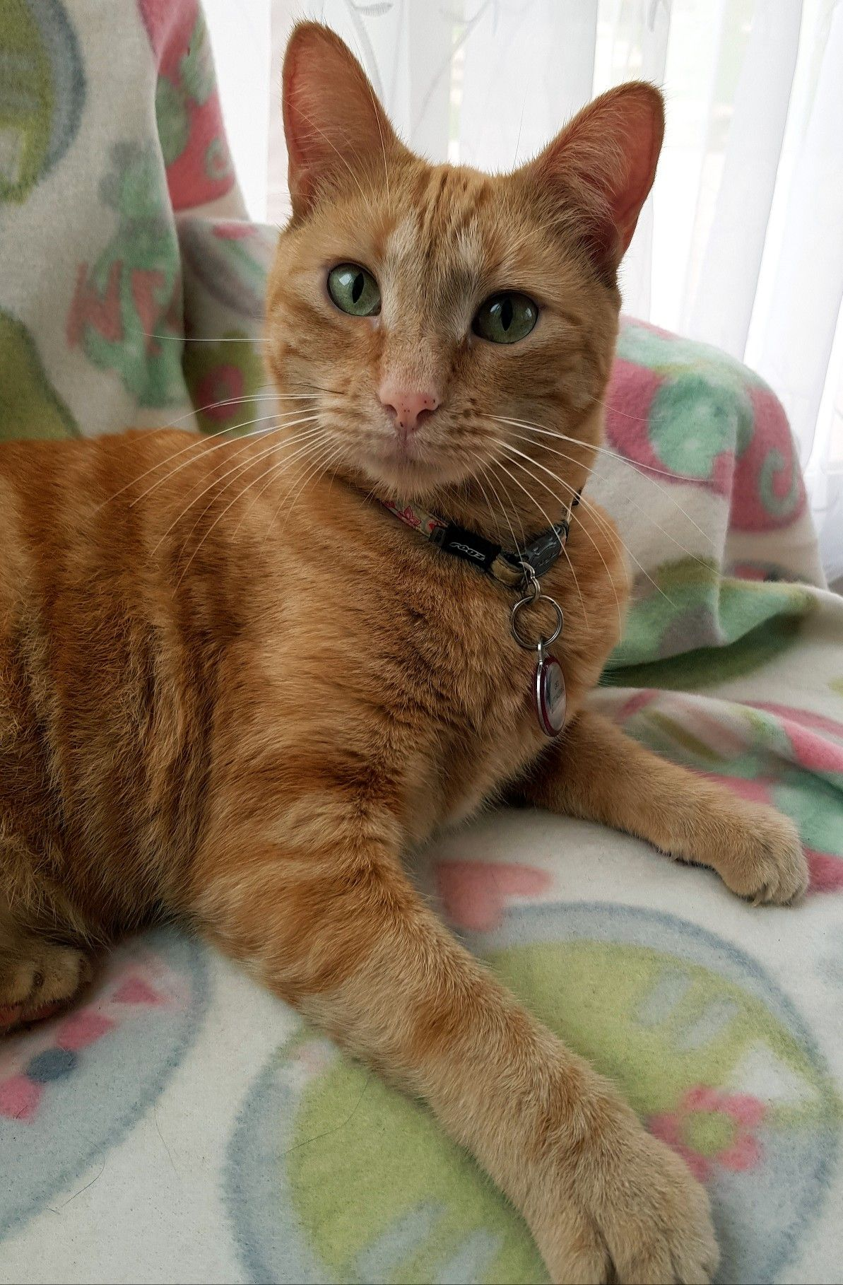 Pin By Evelda Kruger On Kitty Cats Orange Tabby Cats Tabby Cat
