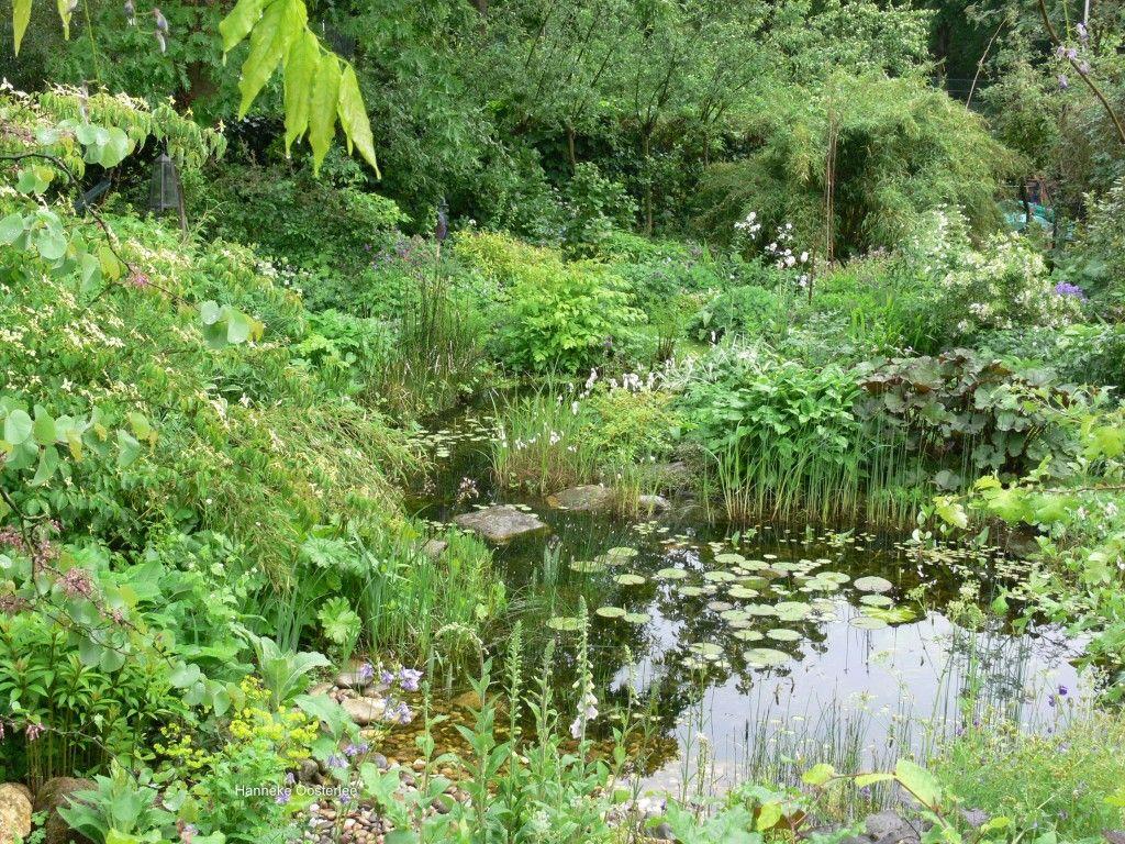 Water in de tuin vijver разное pinterest garden pond и small