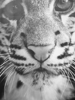 Always have wanted a tiger or leopard…never got that wish