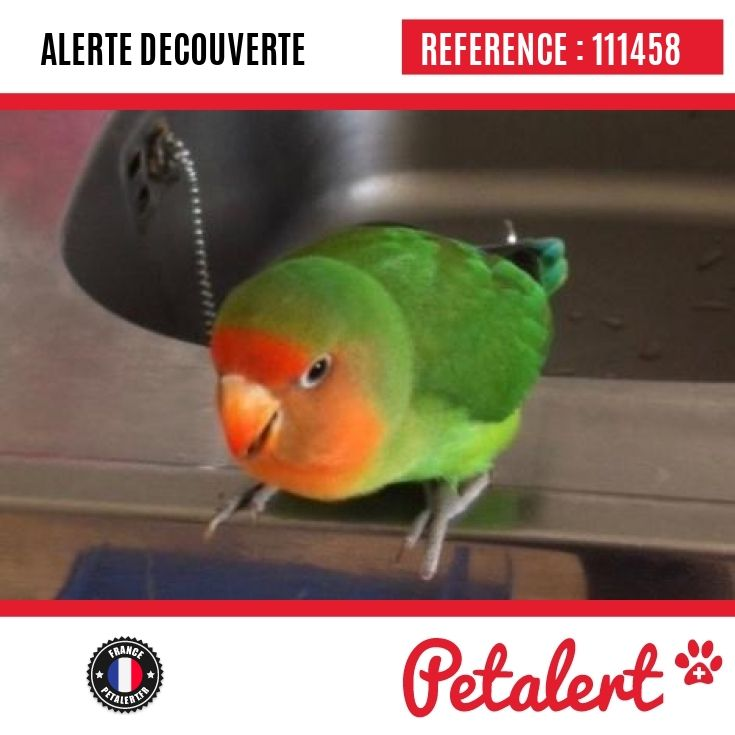 Cette Alerte est désormais close : elle n'est donc plus visible sur la plate-forme www.petalert.fr.  Une famille - aimant les oiseaux - s'est proposée de le recueillir. Merci pour votre aide.