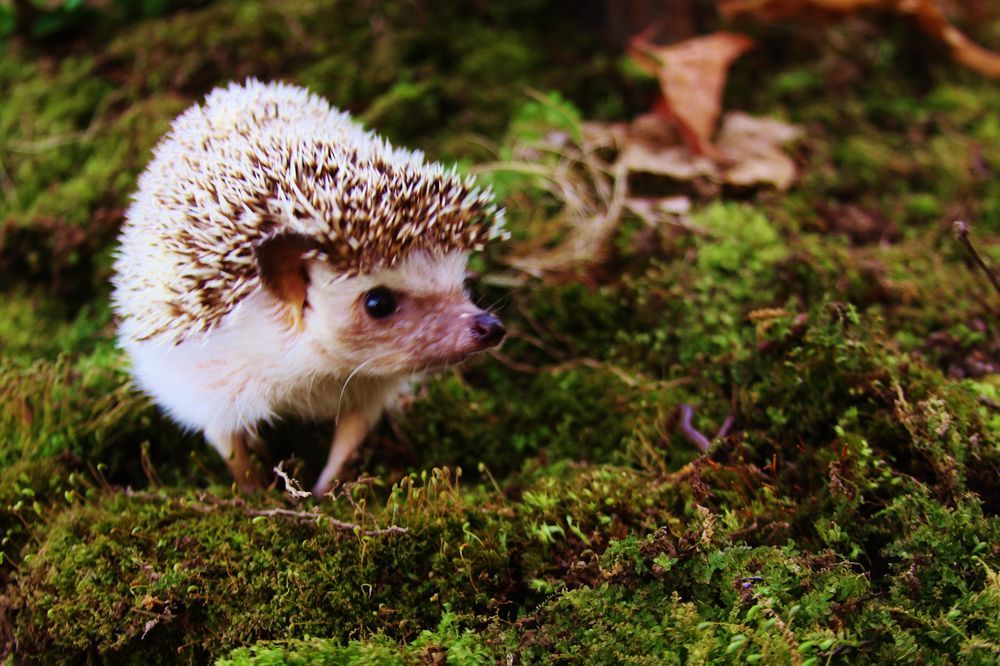 Hunting in the moss Photo by David Miller -- National Geographic Your Shot