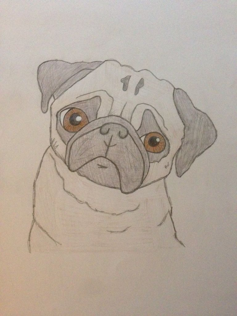 I Love My Drawing Of A Pug With Images Dog Drawing Animal