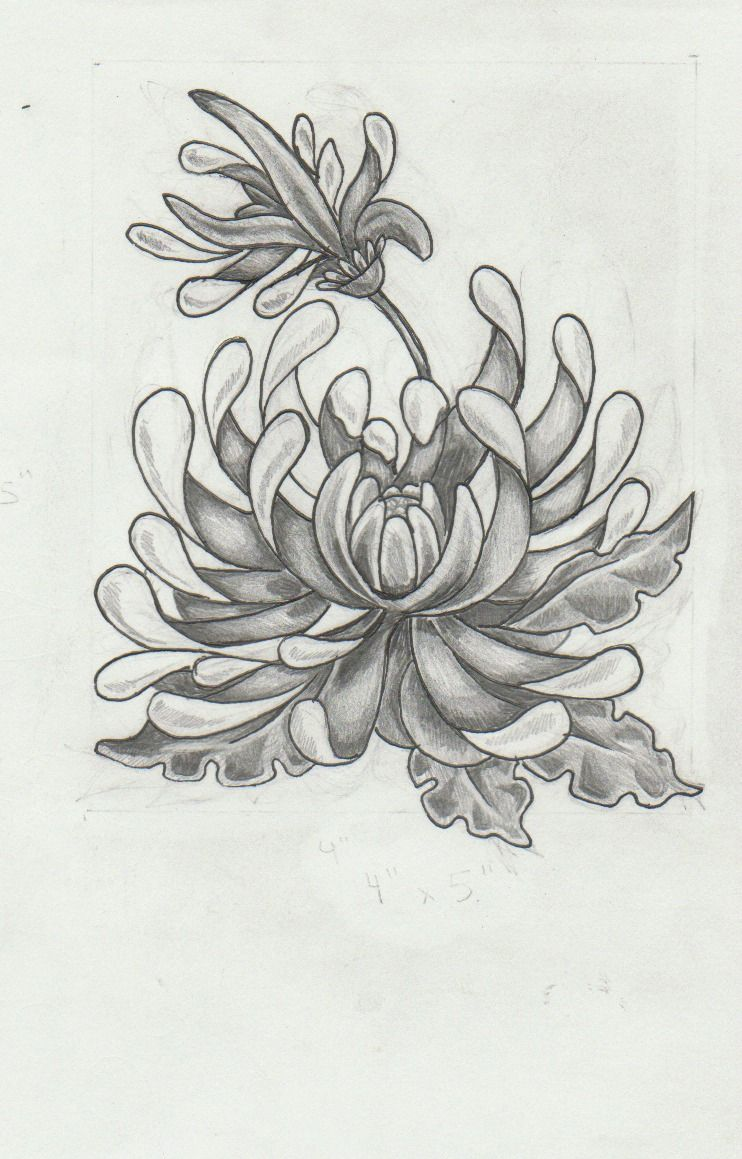 Chrysanthemum Tattoo Design By Mashamanya Deviantart Com On Deviantart Chrysanthemum Tattoo Chrysanthemum Drawing Flower Tattoos