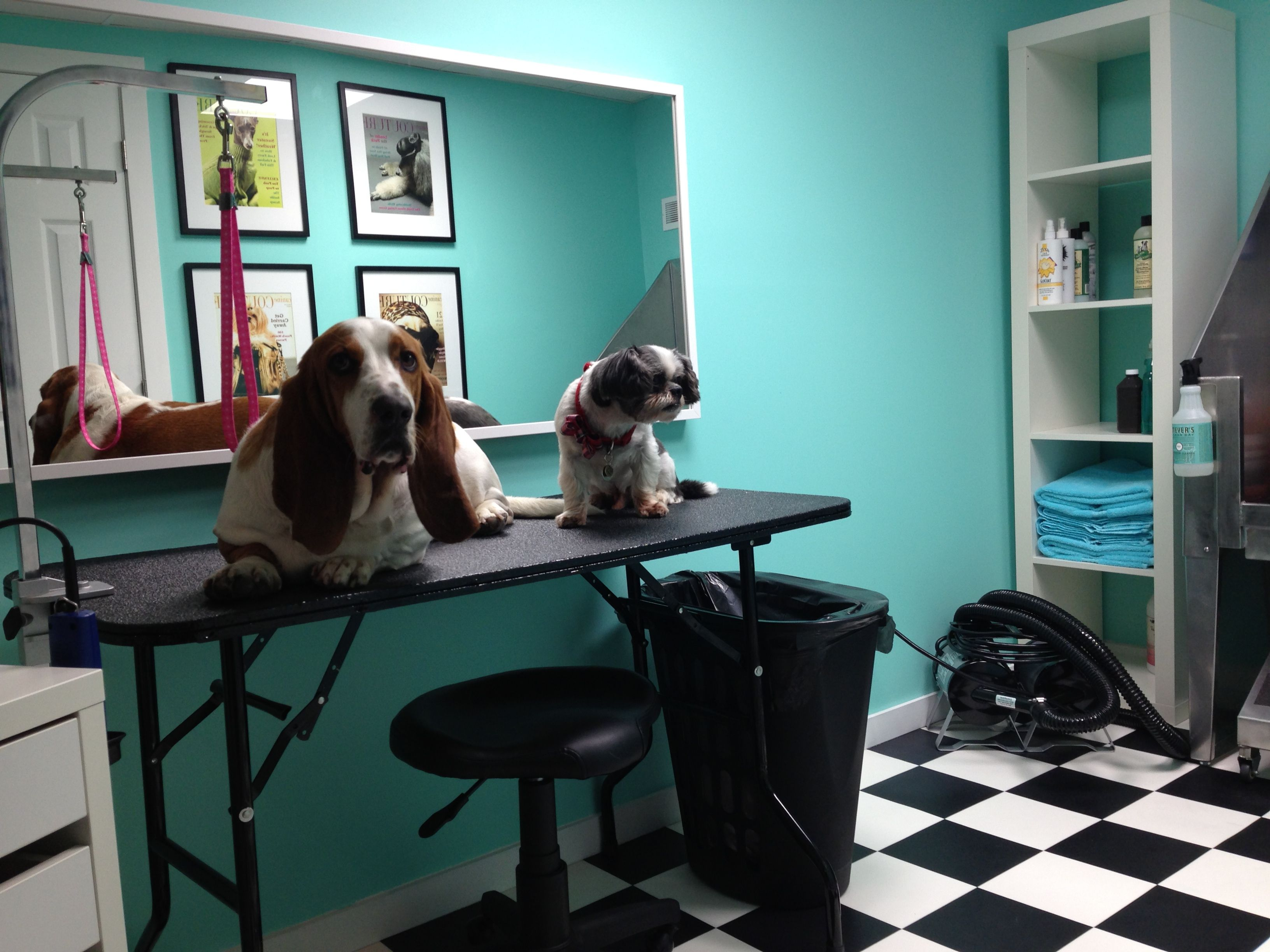 Ideas For Decorating Your Dog Grooming Salon