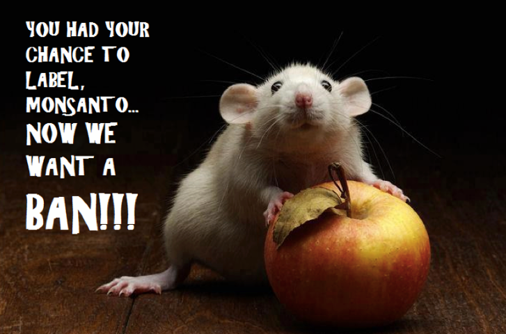 to The Paleo Network! Pet rats, Dumbo rat, Cute rats