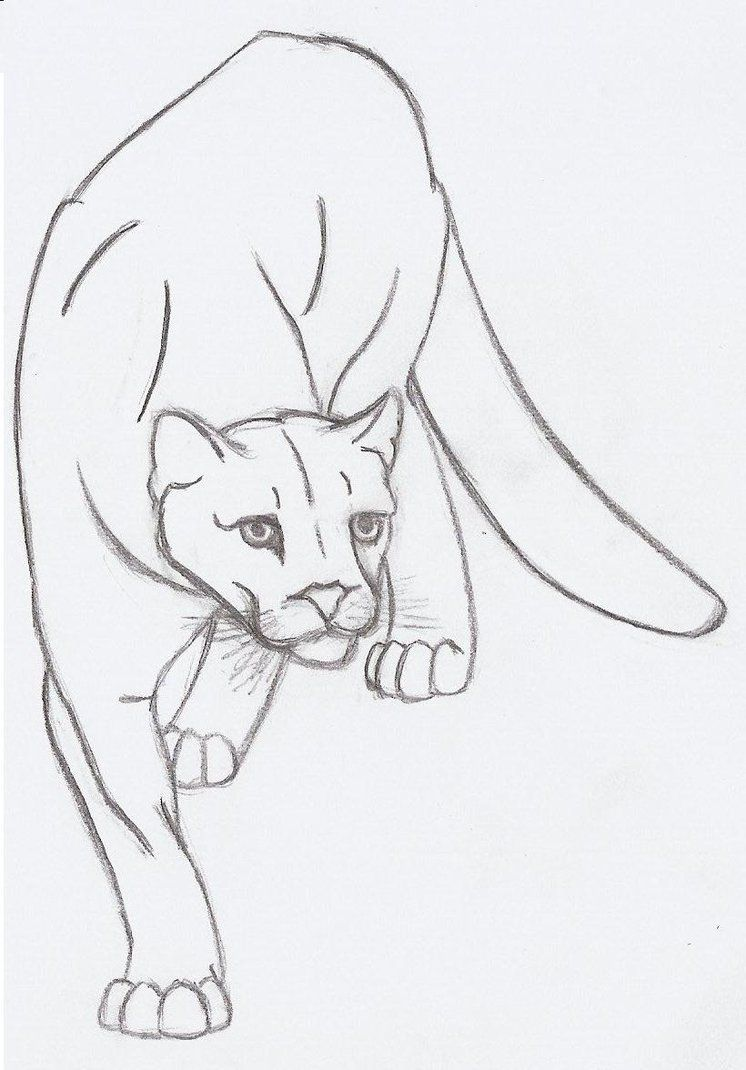 mountain lion quick sketch by metalharpey on deviantart