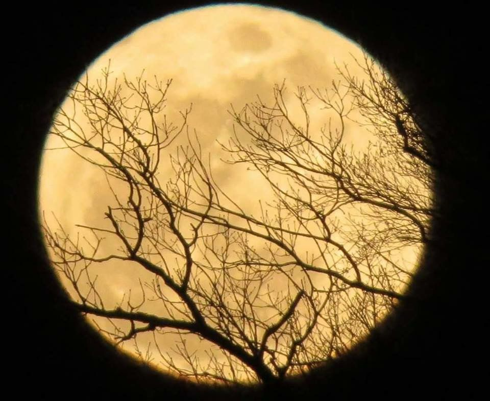 When a full moon is close to the apogee, it is called a micromoon. Full Moon for February 2021 | Snow moon, Beautiful moon, Moon