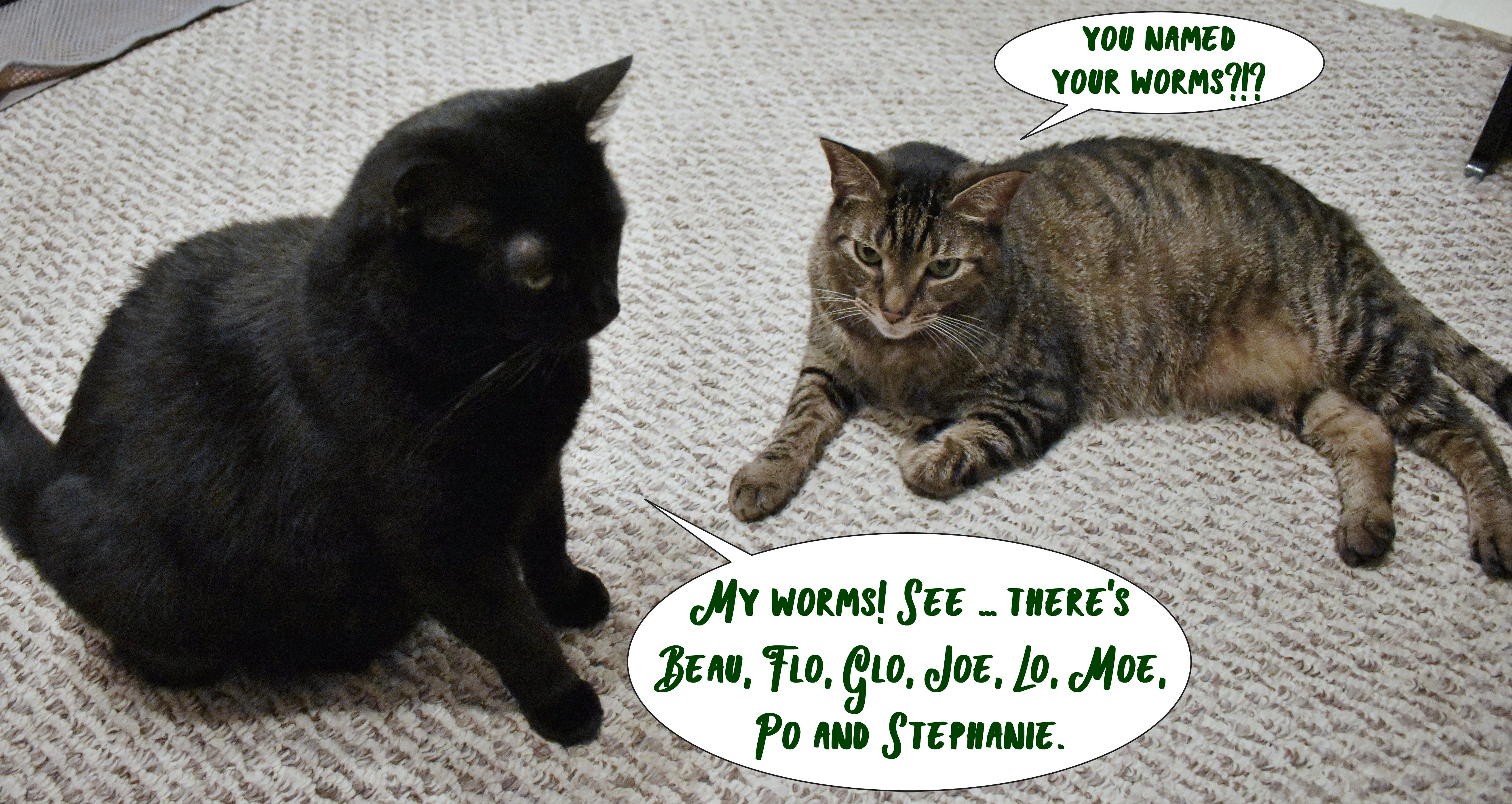 Let's talk about WORMS?!? ChewyInfluencer Cats and