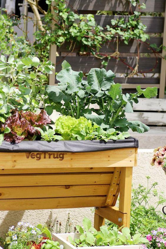 木箱な畑 ベジトラグ で野菜づくり中 ラディッシュとブロッコリーの