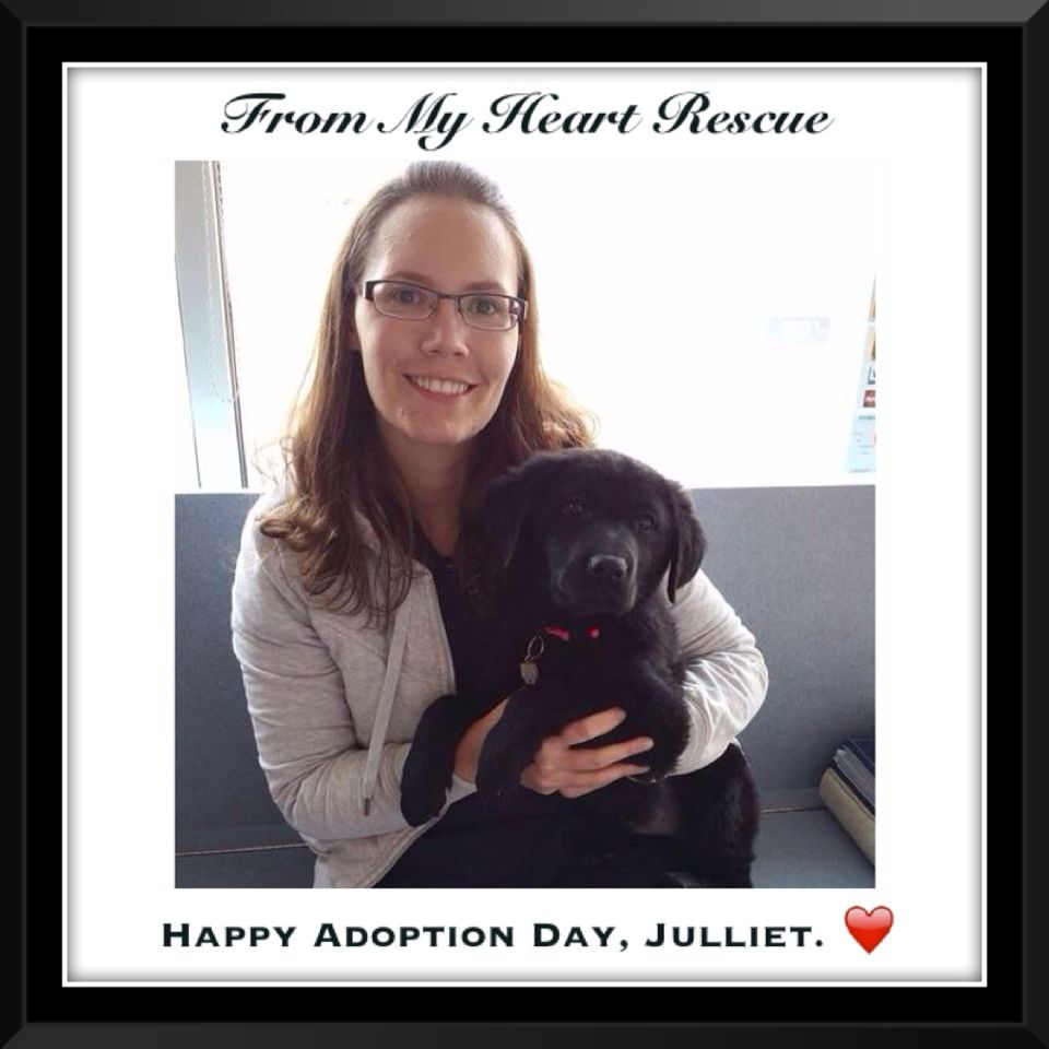 #Please ❤️+ #PIN #FromMyHeartRescue #RescueWithoutBorders #SavingOneDogAtaTime ~ #Happy #Adoption #Day #Julliet #Speghetti   *Thank you for your support.❤️ *Info, Foster, Adoption, PayPal & e-transfer: frommyheartrescue@hotmail.com    *Our Vets: Brock St. Animal Hospital/FMHR 905-430-2644   *Fundraising & Volunteering: FMHRfundraising@hotmail.com     *Gift Basket Donations: FMHRgifts@hotmail.com   ~www.frommyheartrescue.com        *Find us on Petfinder, Youtube, FB, Twitter, Instagram…