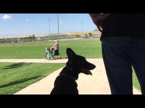 Dog Training Colorado Springs Prestige K9 Is Colorado S Premier