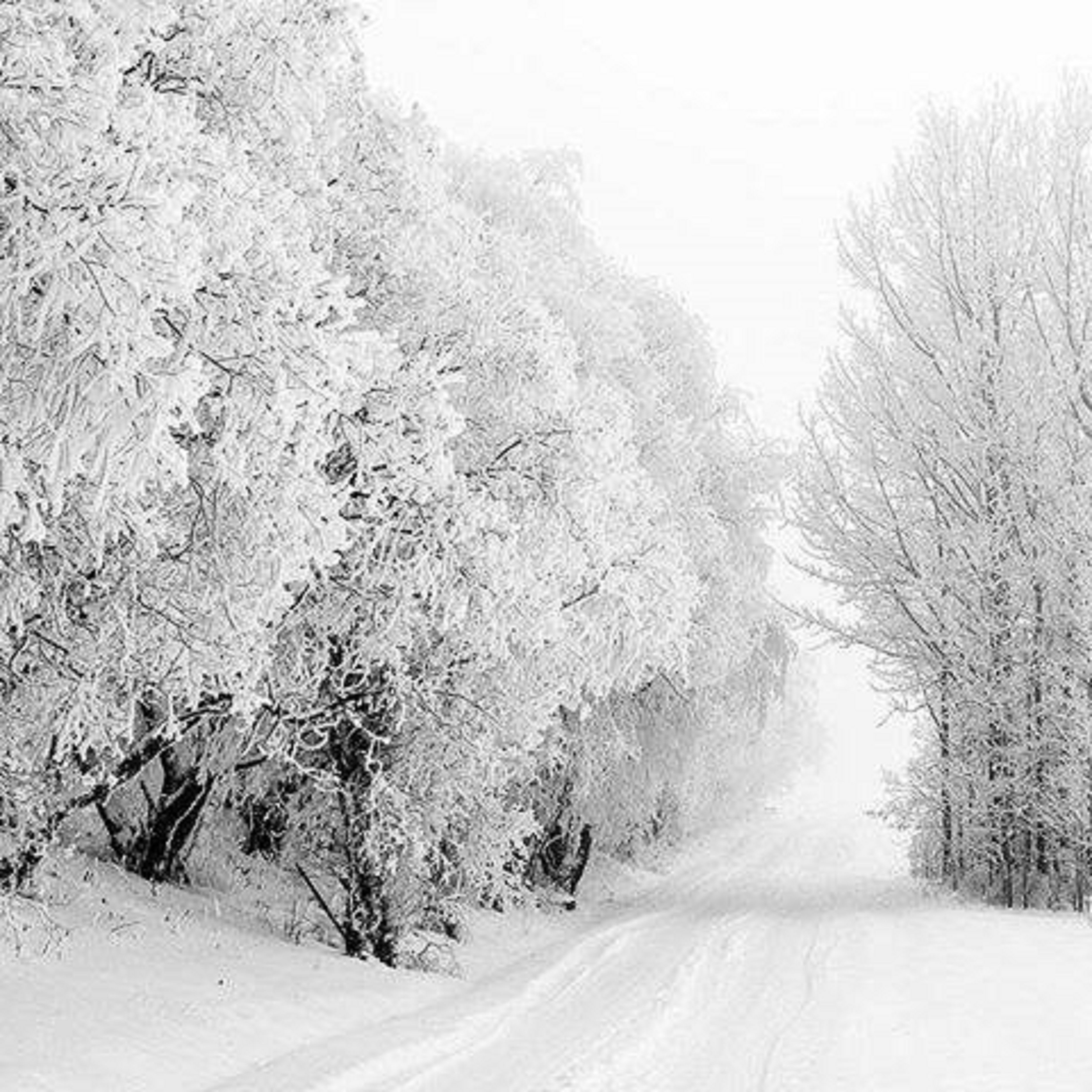 winter and snow trees - photo #31