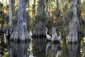 Florida. Everglades