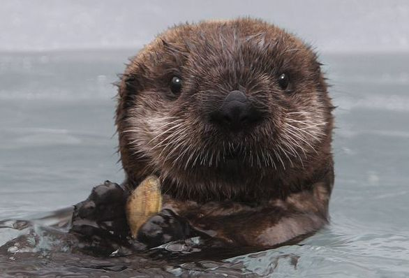 Sea Otters are my favorite