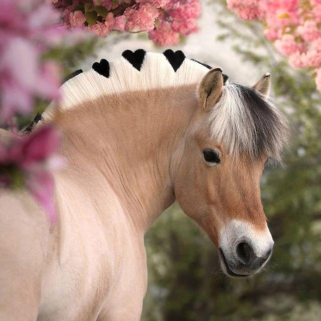 Kramer Pferdesport Auf Instagram Diese Wunderschonen Fotos Haben Den Kalenderwettbewerb 2020 Gewonnen Und S Cute Horses Animals Beautiful Cute Horse Pictures