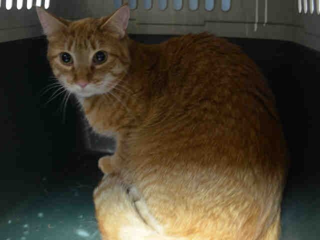 GOYA BEAN A1113704***TO BE DESTROYED 06/03/17***