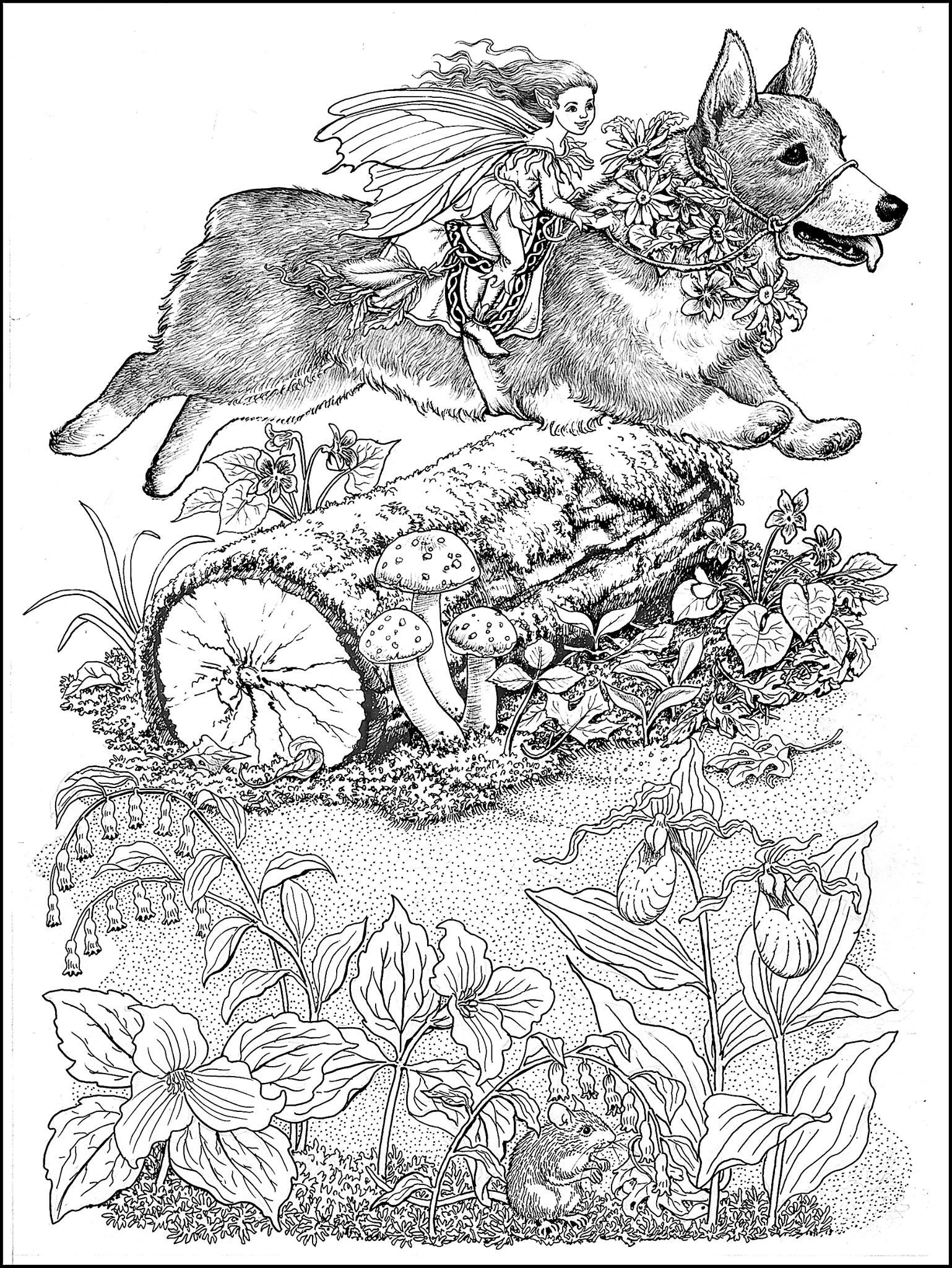 corgi fairy steed from the world of fairies coloring book for