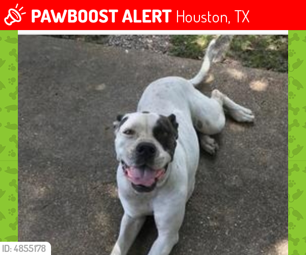 To Be Pts In The Morning Happy Is Scheduled To Be Euthanized At 7am Friday Morning Urgent Harris County Animal Shelter 612 Ca Dogs Losing A Dog Cattle Dog