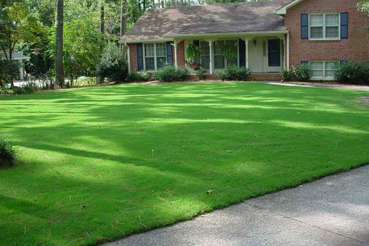 Bermuda Grass Lawn Care Bermuda Is A Low To The Ground Growing Extra Tough Variant Of Grass Offering Wonderful C Bermuda Grass Bermuda Grass Care Grass Care