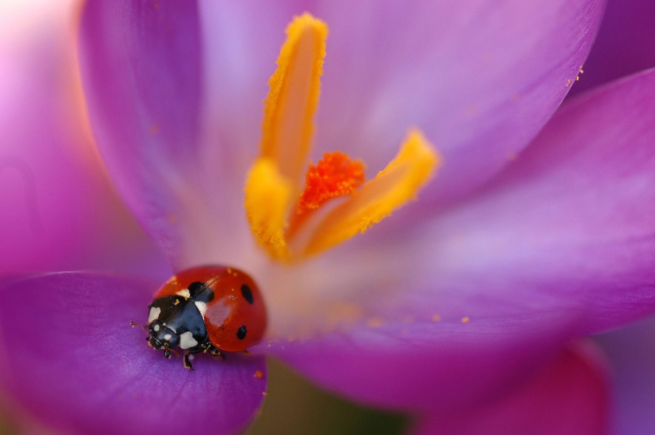 Macro photos as ramblings — The first ladybug photo of the year! Who knows...