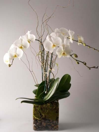 Plant And Flower Delivery Nyc In 2020 Orchids Flower Delivery Plants