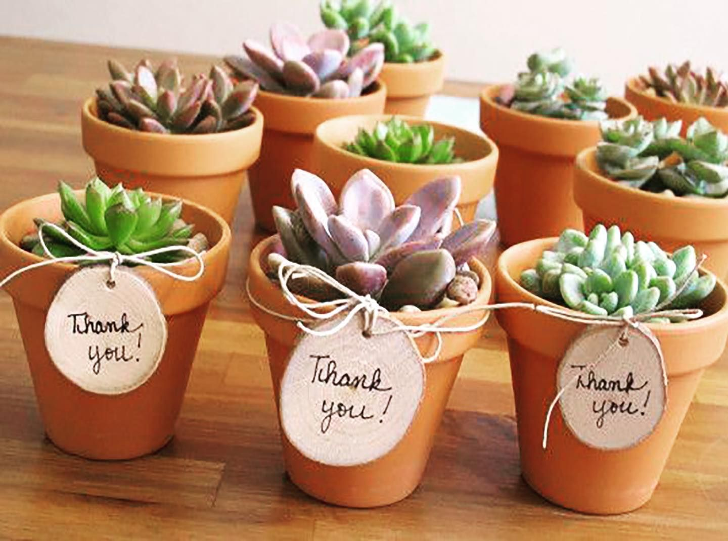 Pin on Succulent Plant Decorations