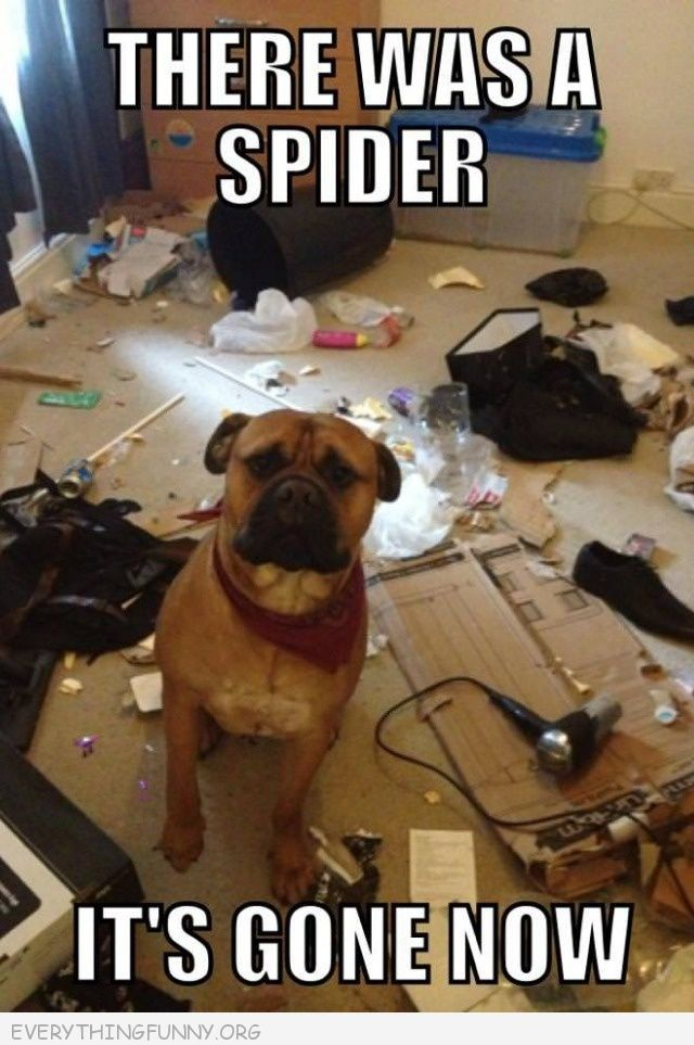 Funny Caption Dog Destroys House There Was A Spider It S Gone Now
