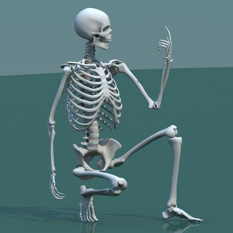 Pin by Henry Bridges on Anatomy in 2019 | Human skeleton