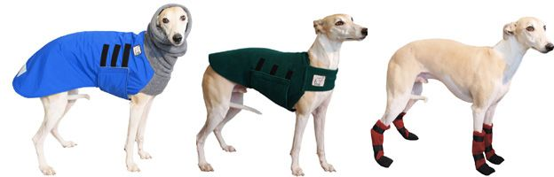 Whippet Cold Climate Special Voyagers K9 Apparel Greyhound
