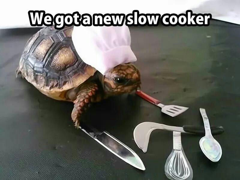 e728d76d92e186ff780c4958c42d3d14 we got a new slow cooker turtle wave! pinterest humor