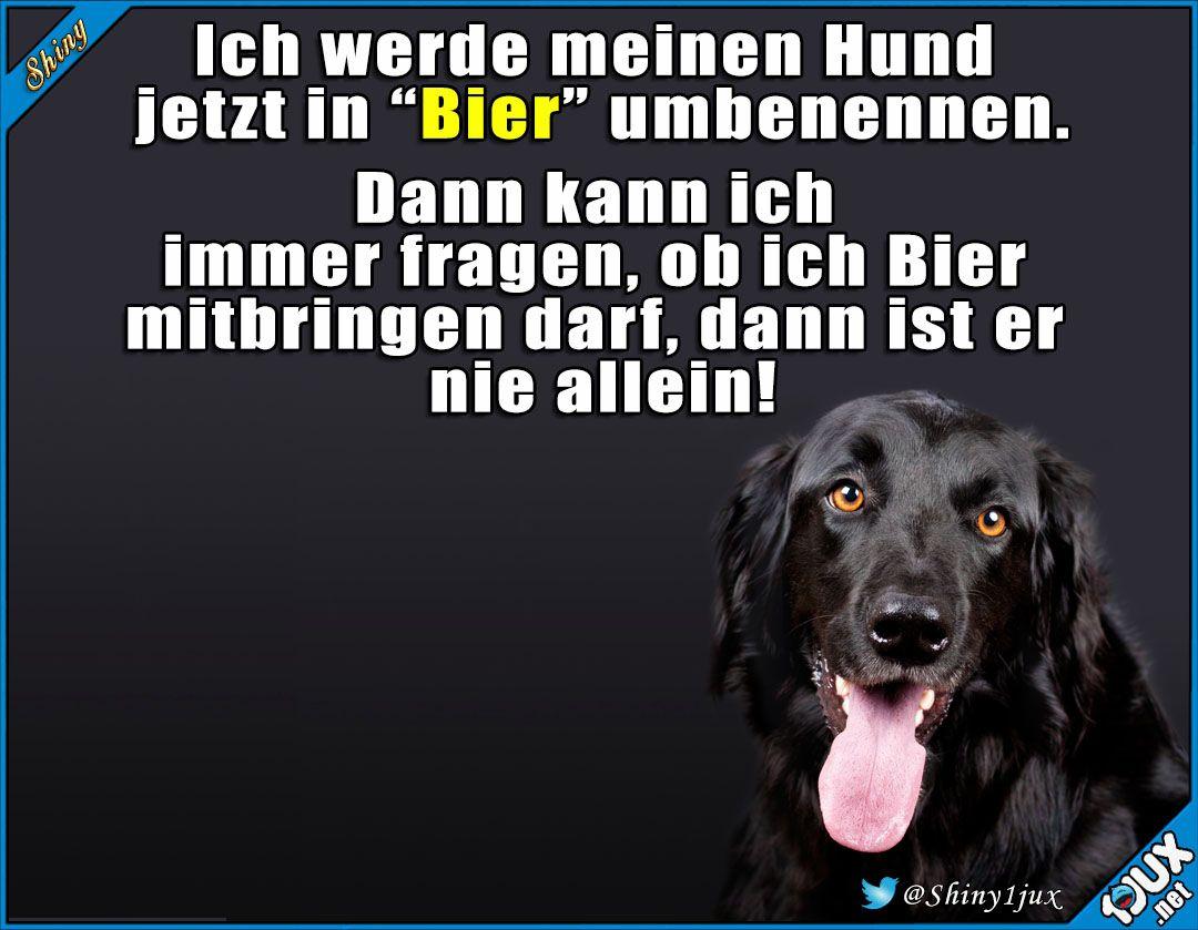 Der perfekte Plan! #Hundeliebe #Hund #Hunde #Sprüche # ...