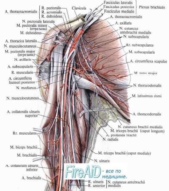 UL ARM | Relax | Pinterest | Akupunktur